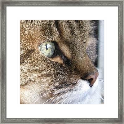My Green Eyed Beauty Framed Print by Ausra Huntington nee Paulauskaite