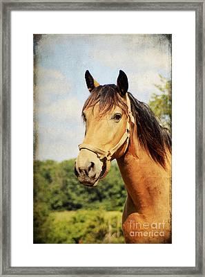 My Kentucky Buddy Framed Print by Darren Fisher