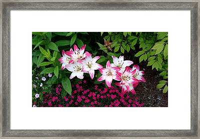 Framed Print featuring the photograph My Lilies by Patricia Hiltz