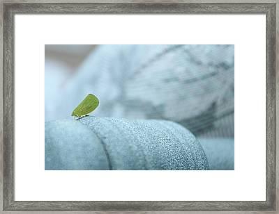 My Little Green Friend Framed Print