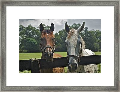 My Little Ponies Framed Print by Thomas Brown