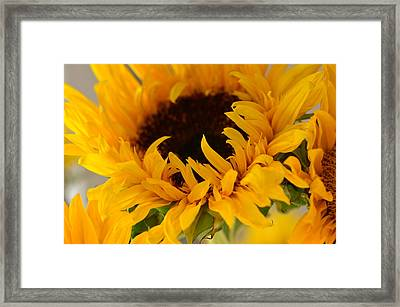 Framed Print featuring the photograph My Little Slice Of Sunshine by Tanya Tanski