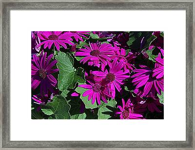 My Magenta Doll Framed Print
