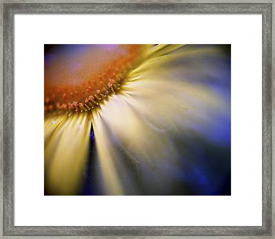 My Mind Is A'racing Framed Print by Zeb Andrews