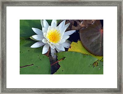 Framed Print featuring the photograph My Name Is Lilly by Tanya Tanski
