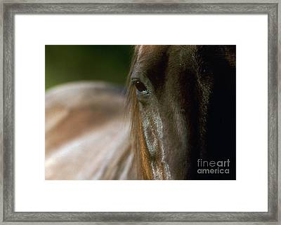 Framed Print featuring the photograph My Neigh-bor's Horse by Doug Herr