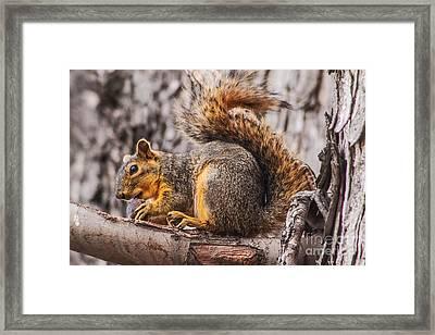 My Nut Framed Print