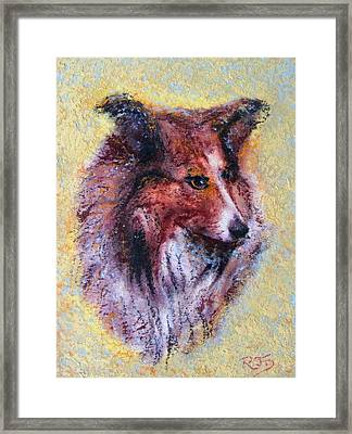 My Pal Shelty Framed Print by Richard James Digance