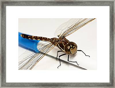 Framed Print featuring the digital art My Pen 02 by Kevin Chippindall