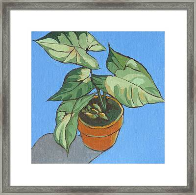 My Plant At Work Framed Print