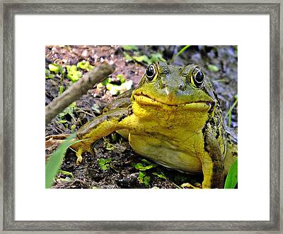 My Prince Framed Print by Mark Williams