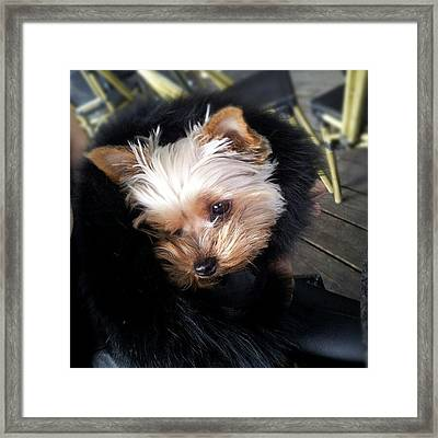 My #princess #dog #yorkie Framed Print