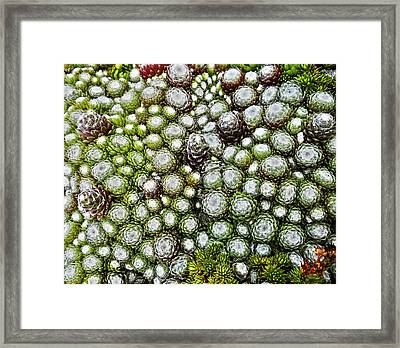 My Rockery ... Framed Print