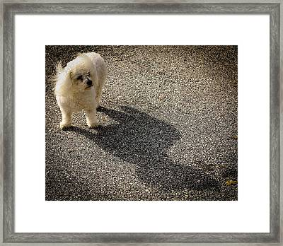 Framed Print featuring the photograph My Shadow by Patrice Zinck
