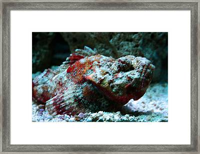 My Ugly Fish Framed Print