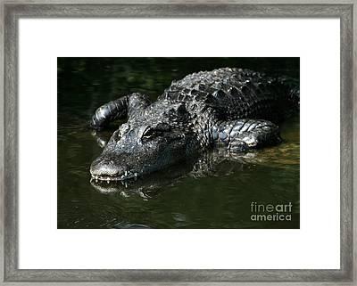 My What Big Teeth You Have Framed Print by Sabrina L Ryan