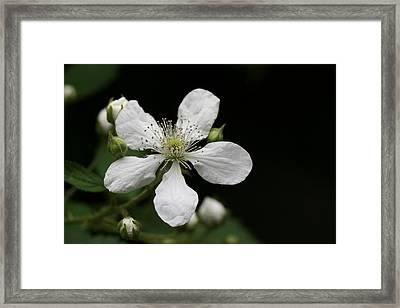 Mysterious Pretty White Flower Framed Print by Bonnie Boden
