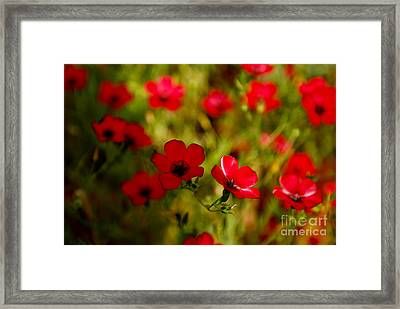 Mysterious Red Zone Framed Print by Syed Aqueel
