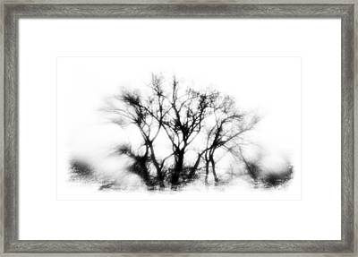 Mysterious Trees Framed Print by David Ridley