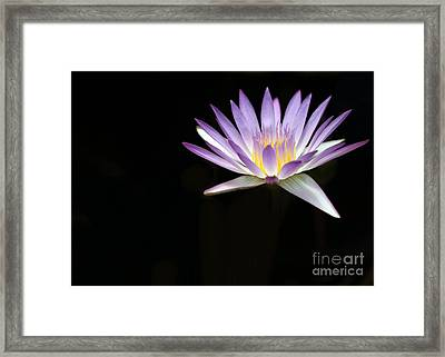 Mysterious Water Lily Framed Print by Sabrina L Ryan