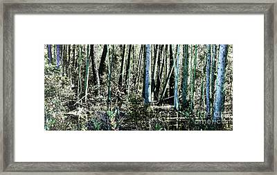 Mystery Forest Framed Print by Olivier Le Queinec