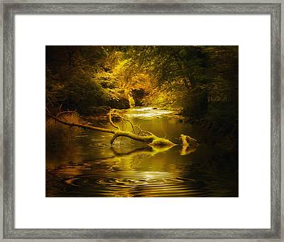 Mystery In Forest Framed Print by Svetlana Sewell