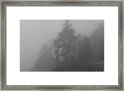 Framed Print featuring the photograph Mystery In The Trees by Katie Wing Vigil