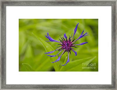 Mystery Wildflower 1 Framed Print by Sean Griffin