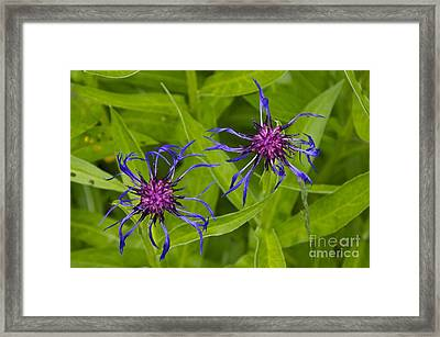Mystery Wildflower 2 Framed Print by Sean Griffin