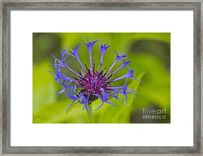 Mystery Wildflower 3 Framed Print by Sean Griffin