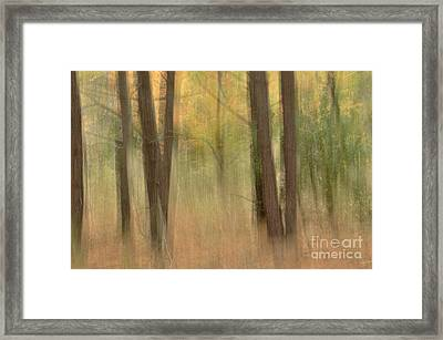 Mystery Woods Framed Print by Tamera James