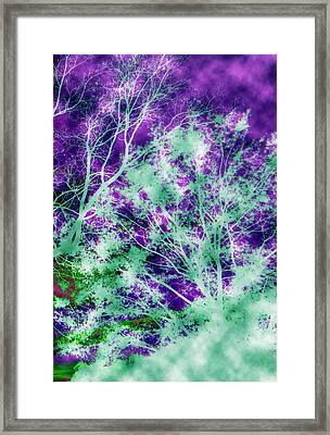 Mystic Trees 3 Of 3 Framed Print