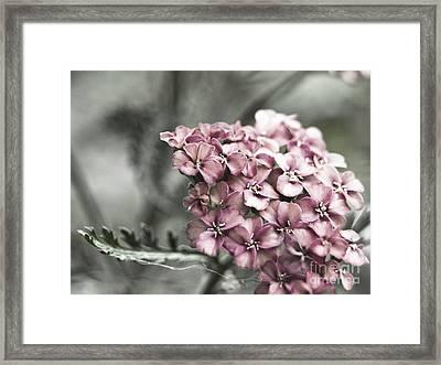 Mystic Yarrow Framed Print