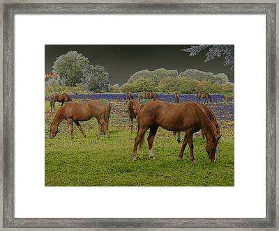 Mystical Horses Framed Print by Fred Whalley