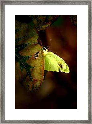 Mystical World Framed Print