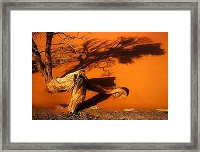 Namibia 2 Framed Print by Mauro Celotti
