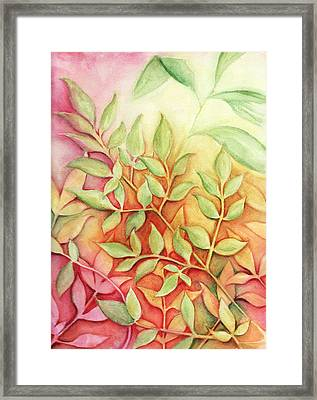 Nandina Leaves Framed Print by Carla Parris