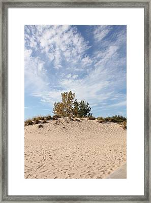 Nantucket Framed Print by Sheryl Burns