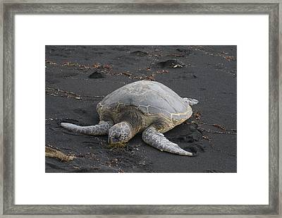 Framed Print featuring the photograph Nap Time by Jerry Cahill