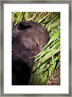 Nap Time Framed Print by Michael Cummings