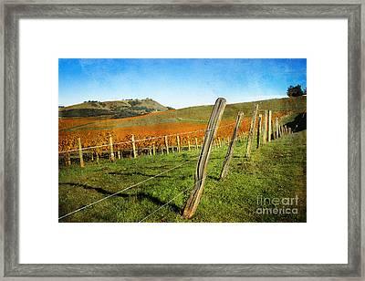 Napa Valley In Autumn Framed Print by Ellen Cotton