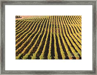 Napa Valley Vineyard . 7d9061 Framed Print by Wingsdomain Art and Photography