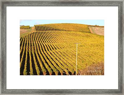 Napa Valley Vineyard . 7d9062 Framed Print by Wingsdomain Art and Photography