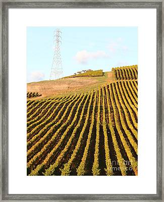 Napa Valley Vineyard . 7d9065 Framed Print by Wingsdomain Art and Photography