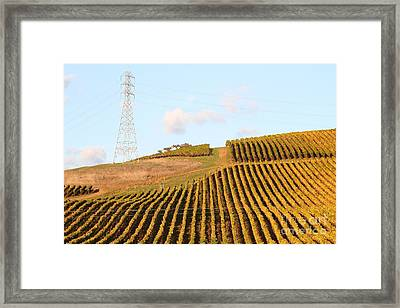 Napa Valley Vineyard . 7d9066 Framed Print by Wingsdomain Art and Photography
