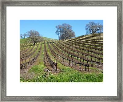 Napa Vineyard Framed Print by Tony Stroh