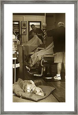 Napping At The Barbershop Framed Print