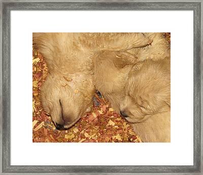Naptime Framed Print by Brenda Alcorn