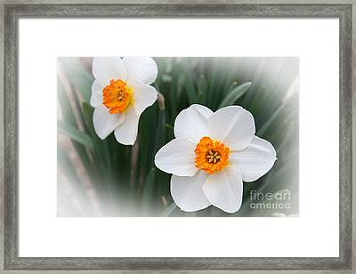 Narcissus Ice Follies 2 In The Mist Framed Print by Andee Design
