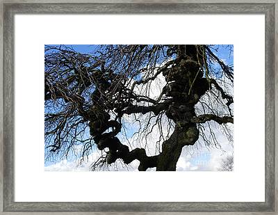 Framed Print featuring the photograph Narley by Bill Thomson
